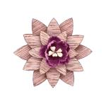 Marguerite violet